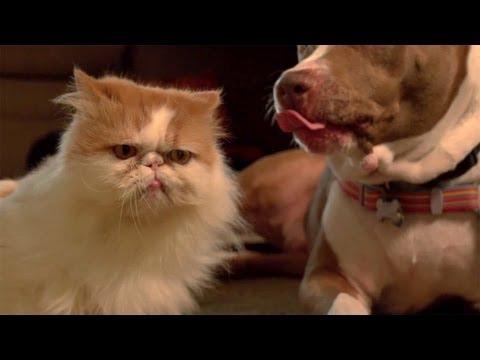 Кот и пес, 240 кадров в секунду