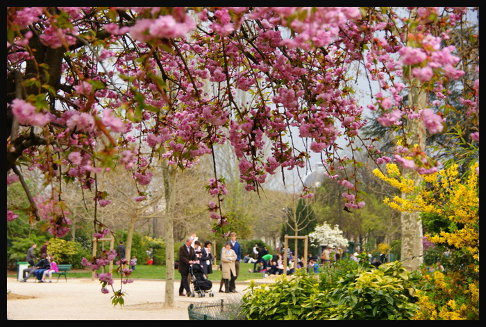 france_paris_spring (700x472, 244Kb)