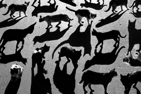 14 Тени отбрасывают котов (600x399, 78Kb)