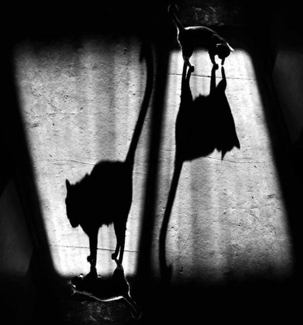 27 Тень и её кот и кот и его тень (600x643, 98Kb)
