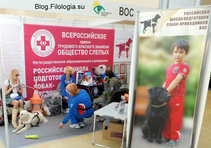 Здесь готовят собак-поводырей/3241858_integr05 (700x492, 83Kb)
