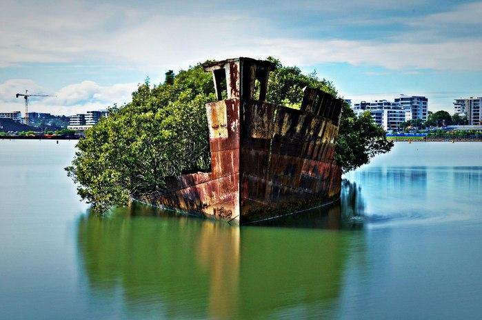 корабль-лес SS Ayrfield у берегов австралии фото 3 (700x464, 76Kb)