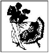 14 (158x170, 8Kb)