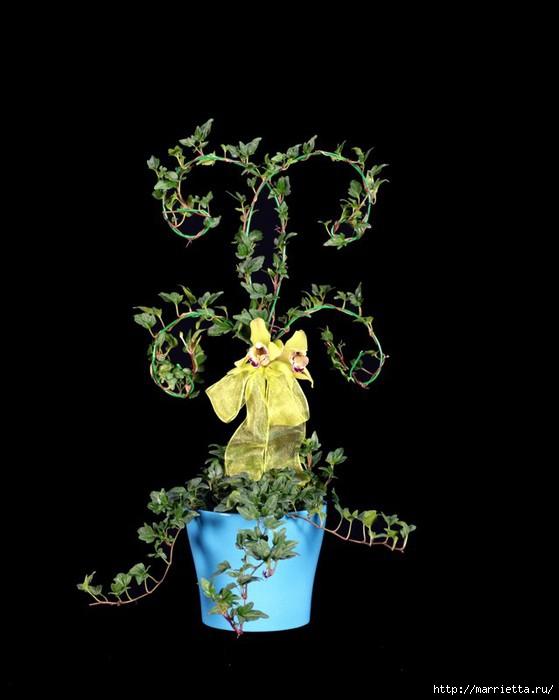 Плющ (Хедера хеликс). Потрясающие композиции для украшения дома и сада (21) (559x700, 107Kb)