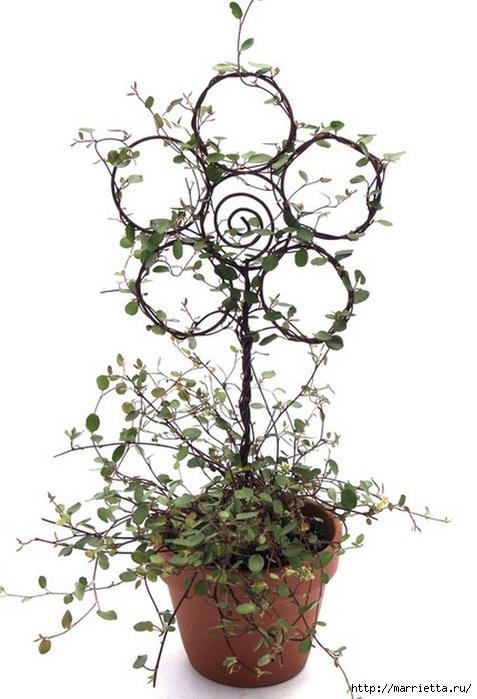 Плющ (Хедера хеликс). Потрясающие композиции для украшения дома и сада (46) (477x700, 165Kb)