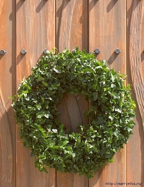 Плющ (Хедера хеликс). Потрясающие композиции для украшения дома и сада (48) (471x614, 265Kb)