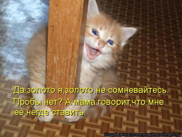 kotomatritsa_0I (700x524, 59Kb)
