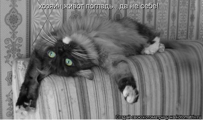 kotomatritsa_a (700x416, 45Kb)