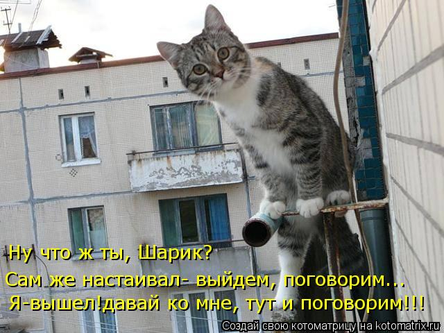 kotomatritsa_g (640x480, 65Kb)