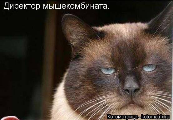kotomatritsa_Ng (554x385, 35Kb)