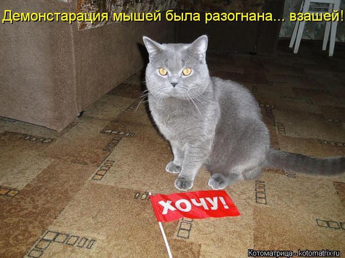 kotomatritsa_oj (700x524, 66Kb)