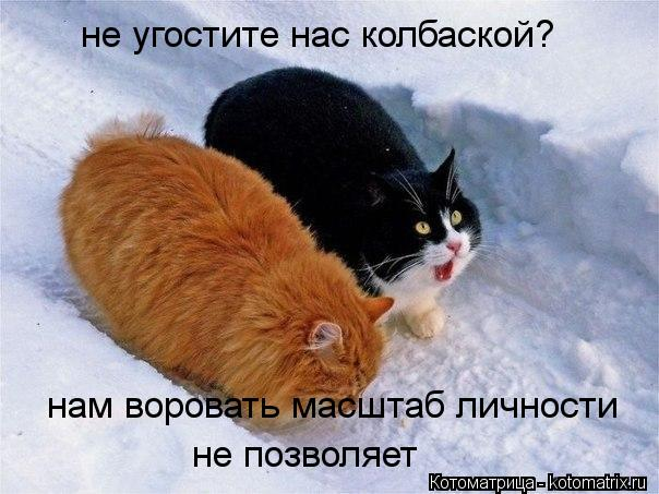 kotomatritsa_Q_ (604x453, 52Kb)