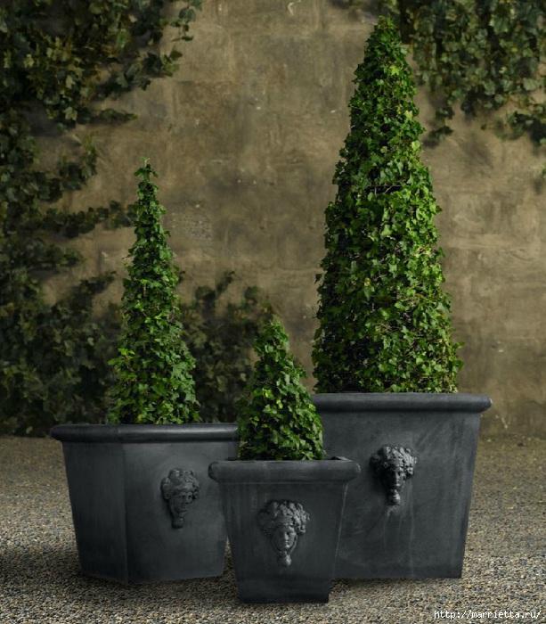 Плющ (Хедера хеликс). Потрясающие композиции для украшения дома и сада (55) (613x700, 275Kb)