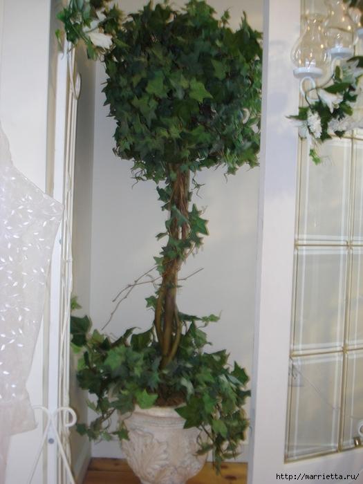 Плющ (Хедера хеликс). Потрясающие композиции для украшения дома и сада (67) (525x700, 259Kb)