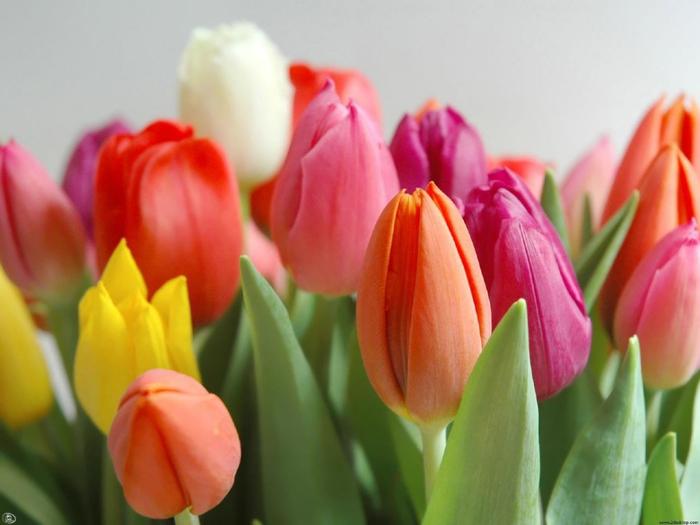 Картинки цветы продажа 1