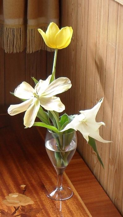 тюльпан-девственник (398x700, 184Kb)