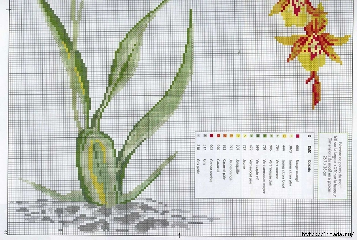 Floral 11 (700x470, 303Kb)