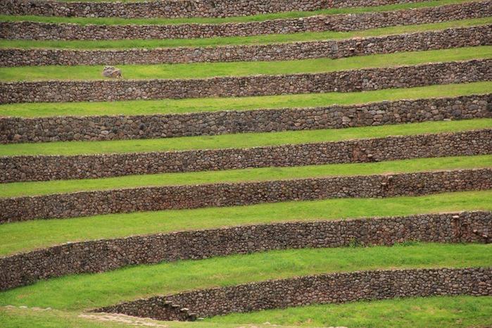 террасы цивилизация древних инков 3 (700x466, 157Kb)