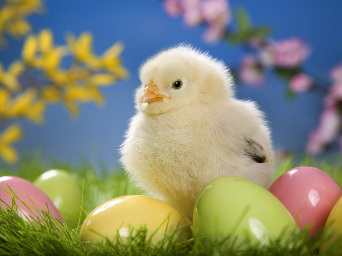 Easter Chick (700x525, 333Kb)
