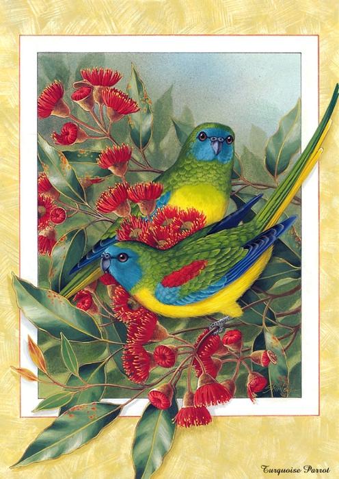 p-Australian_Birds_Cal2003_06 (496x700, 320KB)
