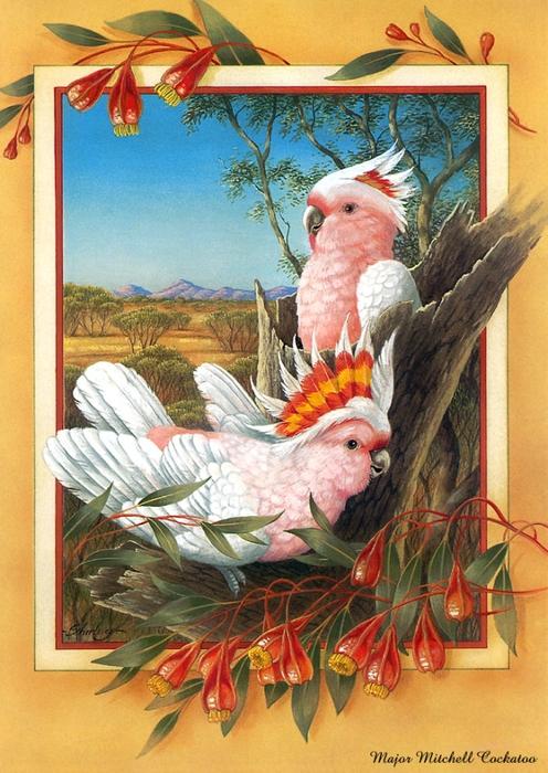 p-Australian_Birds_Cal2003_07 (496x700, 319KB)