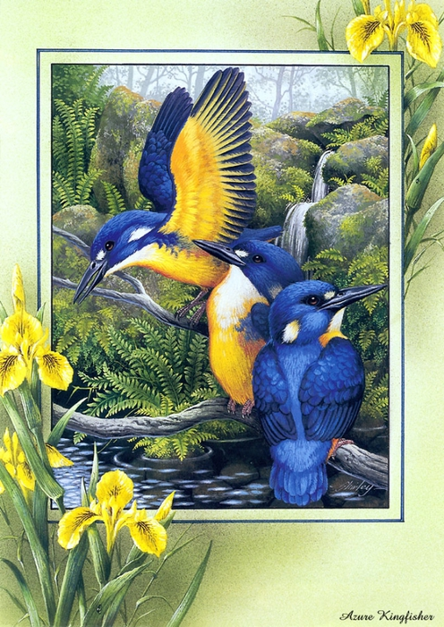 p-Australian_Birds_Cal2003_12 (496x700, 350KB)