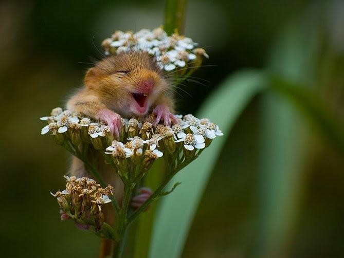 www_animaljpg_ru-546 мышка-по (669x502, 62Kb)