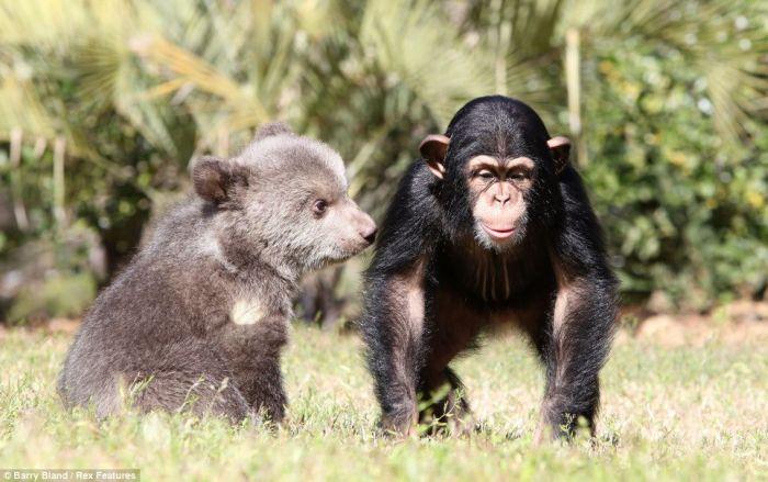 дружба животных фото (700x439, 60Kb)