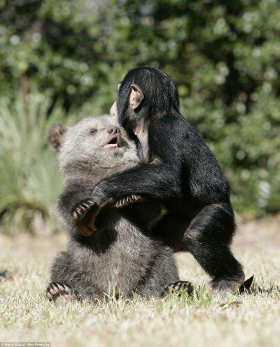 дружба животных фото 1 (565x700, 70Kb)