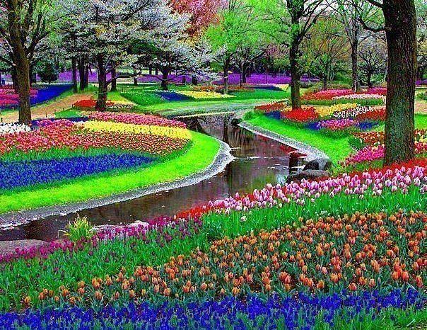 цветочное настроение (604x466, 130Kb)