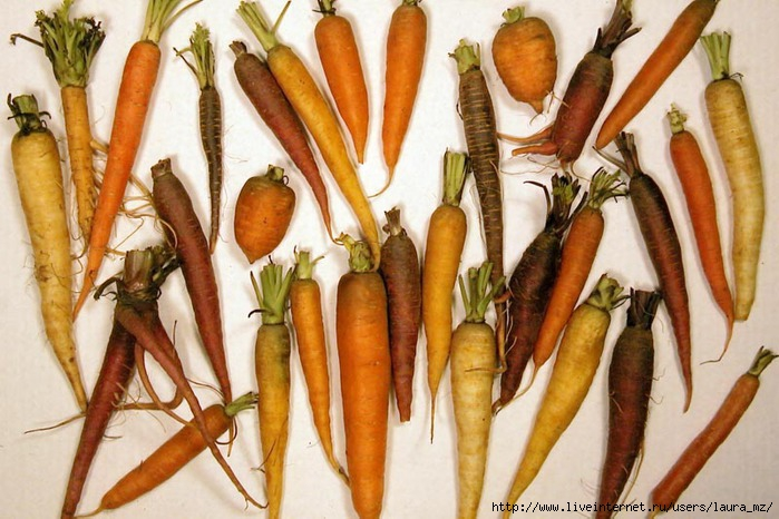 Carrot (700x466, 219Kb)