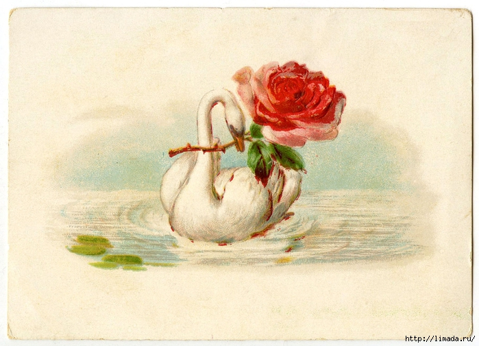 Vintage-Swan-Rose-GraphicsFairy (700x505, 280Kb)