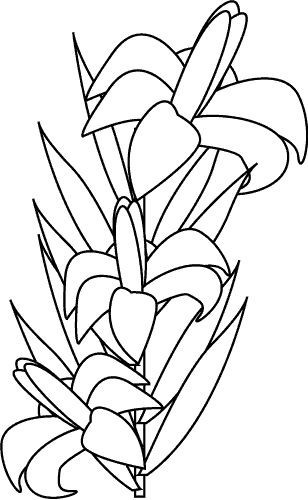 1158963_white-lily-coloring.gif (308x500, 41Kb)
