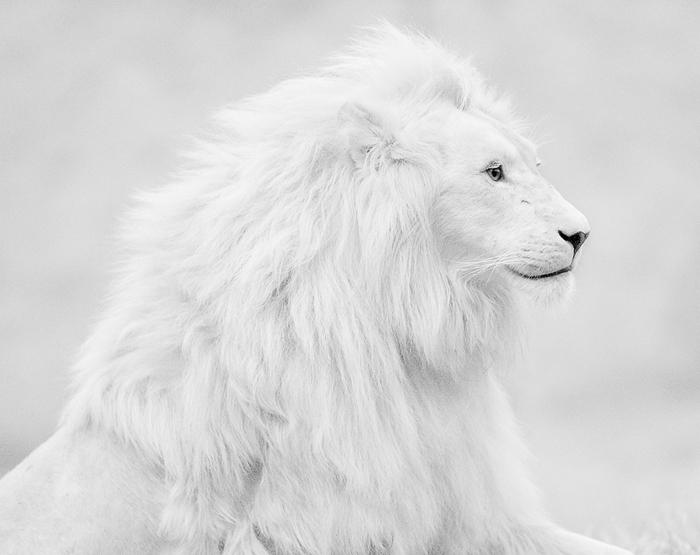 белый (700x555, 136Kb)
