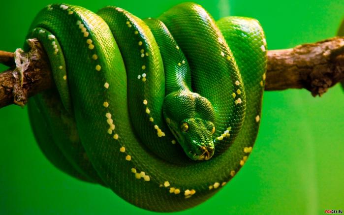 змея (700x437, 351Kb)