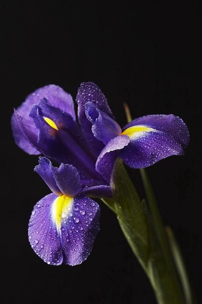 фиолетовый (400x601, 43Kb)