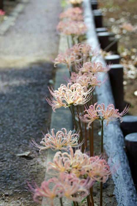 цветывау4 (465x700, 84Kb)