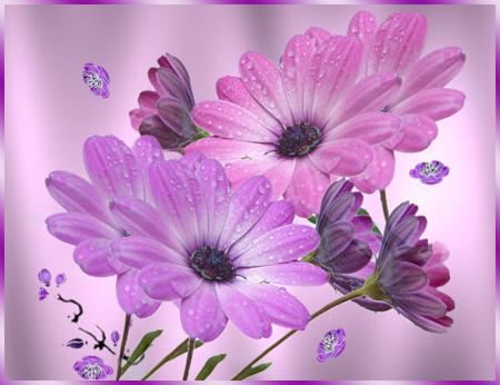 Розовые-ромашки (450x346, 252Kb)