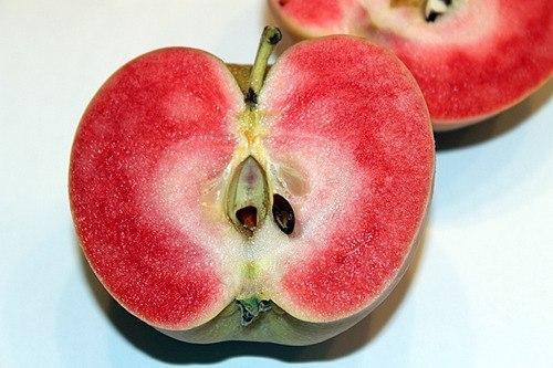 розовые яблоки фото (500x333, 80Kb)