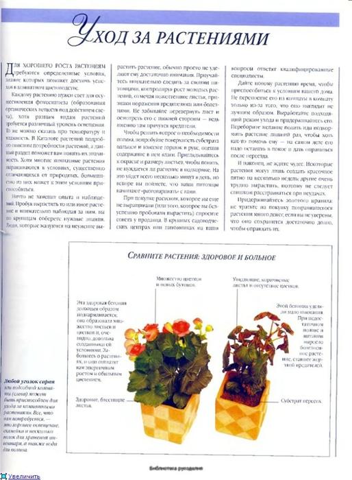 комнатные растения (1) (514x700, 230Kb)