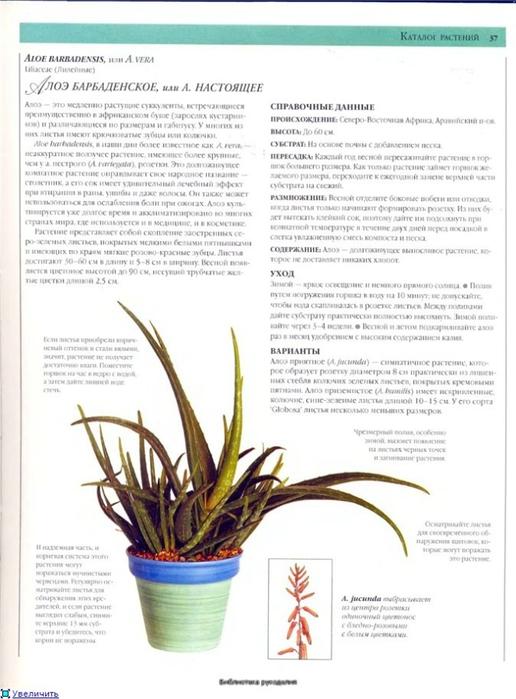 комнатные растения (3) (516x700, 198Kb)