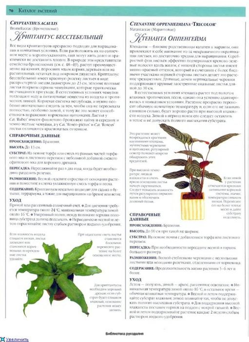 комнатные растения (14) (511x700, 248Kb)