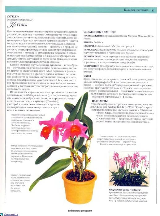комнатные растения (19) (517x700, 227Kb)