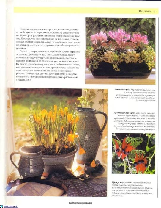 комнатные растения (20) (542x700, 265Kb)