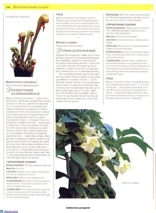 комнатные растения (27) (512x700, 220Kb)