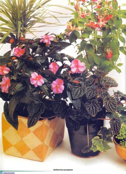 комнатные растения (32) (506x700, 296Kb)