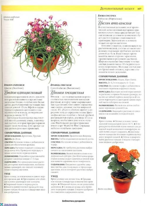 комнатные растения (34) (501x700, 228Kb)