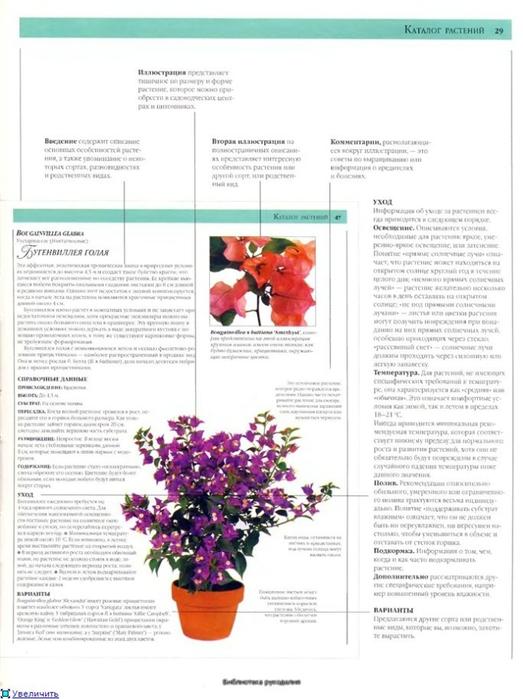 комнатные растения (38) (523x700, 196Kb)