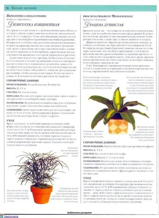 комнатные растения (40) (510x700, 241Kb)