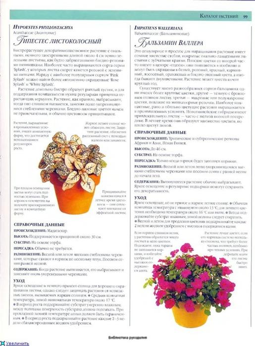 комнатные растения (42) (515x700, 250Kb)